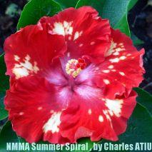 NMMA Summer Spiral