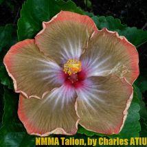 NMMA Talion