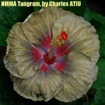 NMMA Tangram