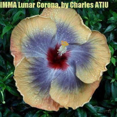 14 IMMA Lunar Corona