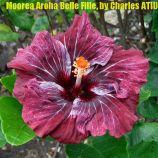 22 Moorea Aroha Belle Fille