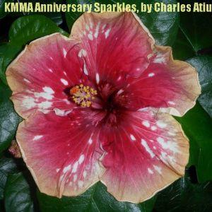 24-KMMA Anniversary  Sparklers