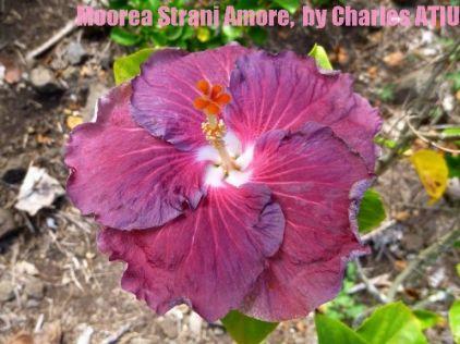 30 Moorea Strani Amore