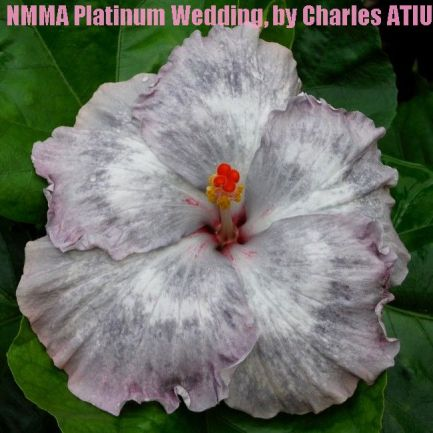 31 NMMA Platinum Wedding