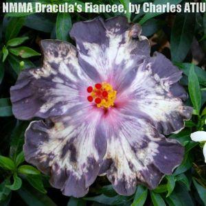 8-NMMA Dracula's Fiancée