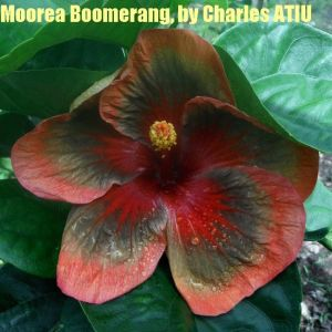 9 Moorea Boomerang