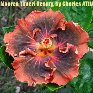 9 Moorea Timeri Beauty
