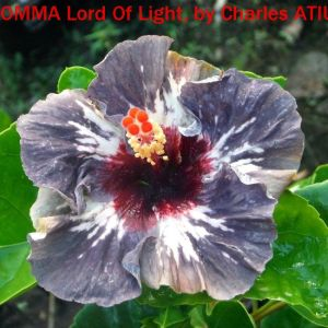9 OMMA Lord Of Light