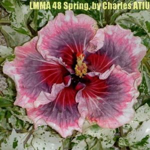 10 LMMA 48 Spring