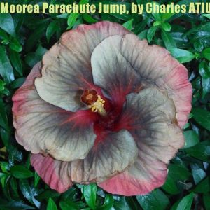 1Moorea Parachute Jump