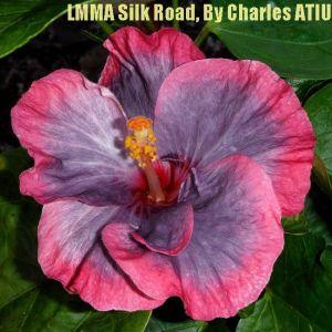 24 LMMA Silk Road