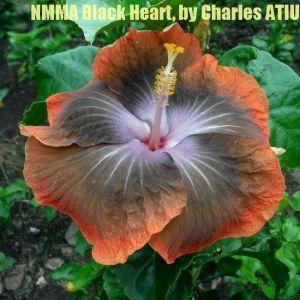 5 NMMA Black Heart