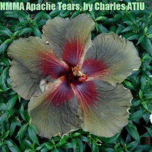 6 NMMA Apache Tears
