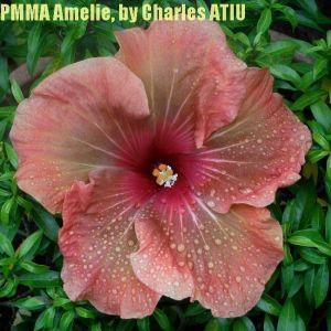 PMMA Amélie