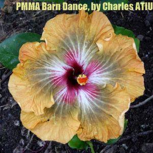 PMMA Barn Dance
