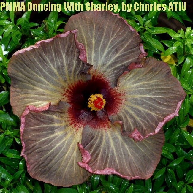 PMMA Dancing With Charlie