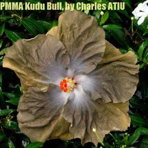 PMMA Kudu Bull