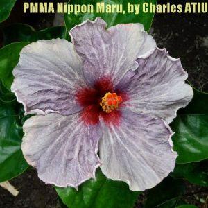 PMMA Nippon Maru