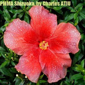PMMA Shizuoka