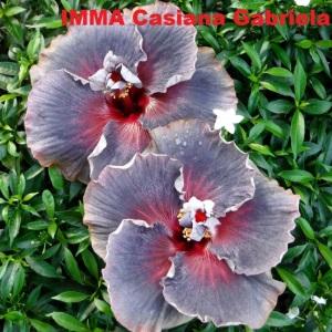 1 IMMA Casiana Gabriela