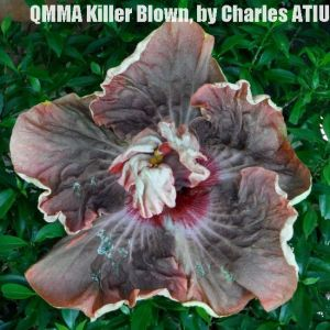 14 QMMA Killer Blow
