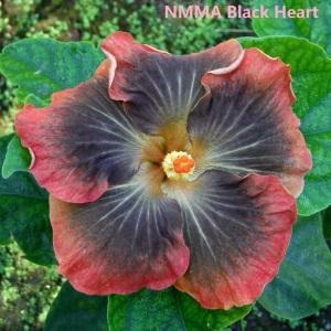17 NMMA Black Heart