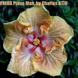 19 PMMA Piano Man