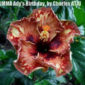 2 JMMA  Ady's Birthday