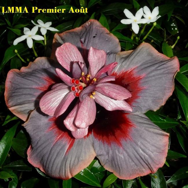 2 LMMA Premier Août