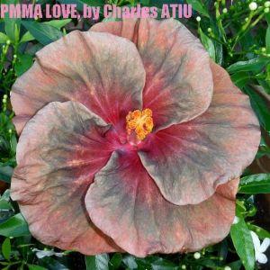 20 PMMA LOVE