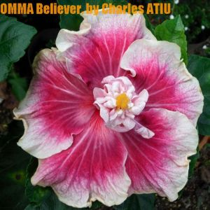 26 OMMA Believer