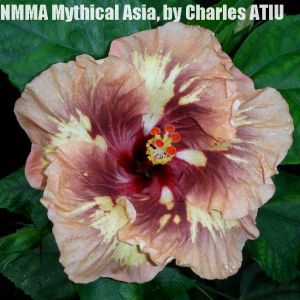 30 -NMMA Mythical Asia