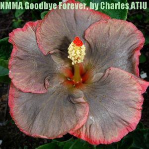34 NMMA Goodbye Forever