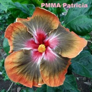 38 PMMA Patricia