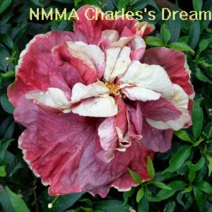 4 NMMA Charles's Dream
