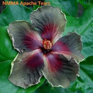 8 NMMA Apache Tears