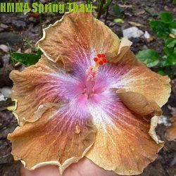 HMMA Spring Thaw
