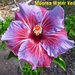 Moorea Water Veil