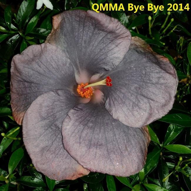 QMMA Bye Bye 2014