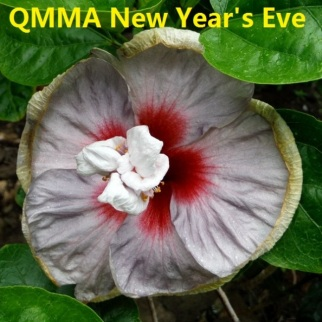 QMMA New Year's Eve
