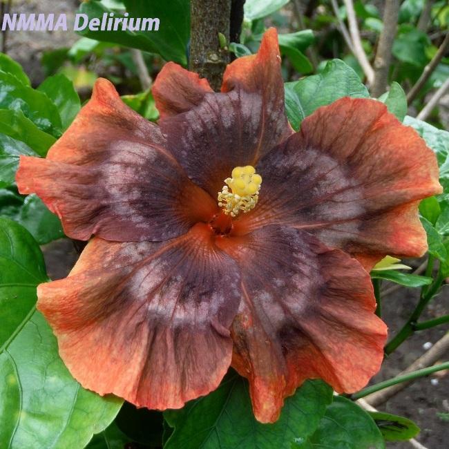 1-NMMA Delirium
