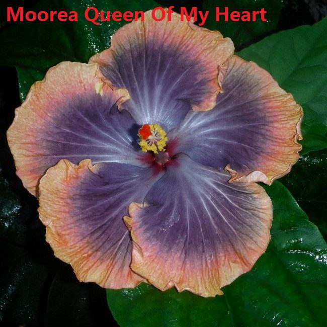 2 Moorea Queen Of My Heart