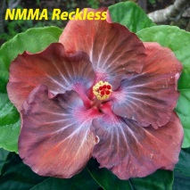 30 NMMA Reckless