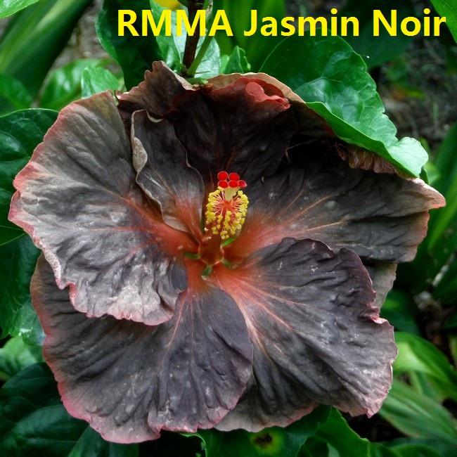 34 RMMA Jasmin Noir