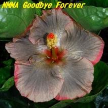 35 NMMA Goodbye Forever
