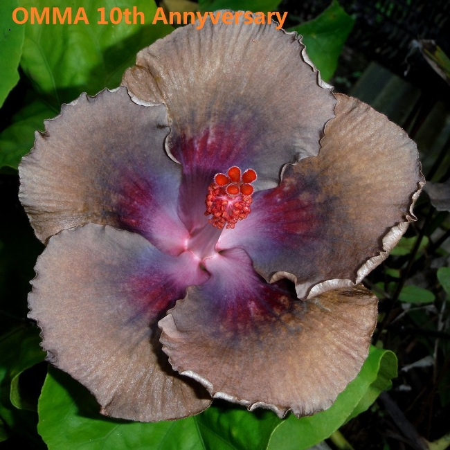 37 OMMA 10th Annyversary