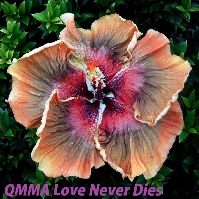 43 QMMA Love Never Dies