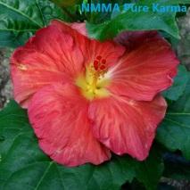 51 NMMA Pure Karma