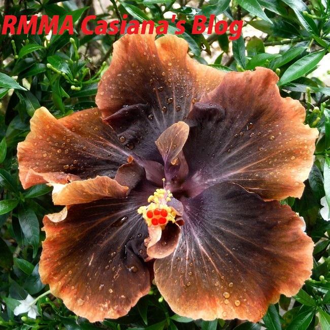 8- RMMA Casiana's Blog