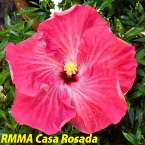 RMMA Casa Rosada